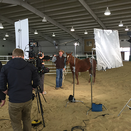 Stable Shoot
